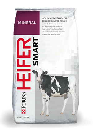 Dairy Cow Feeds Flat Bottom