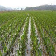 Tela no tejida 100% PP Spunbonded con UV para la agricultura como la estera del control de la mala hierba, paño anti hierba, cubierta de la planta