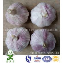 Ajo blanco normal fresco Tamaño 5.0cm De China continental