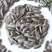 Оптовая новый свежий кондитерских изделий из семян подсолнечника