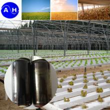 Aminoácidos orgánicos puros libres de Chloridion Aminoácidos de origen vegetal