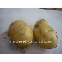 Günstige chinesische frische Kartoffel