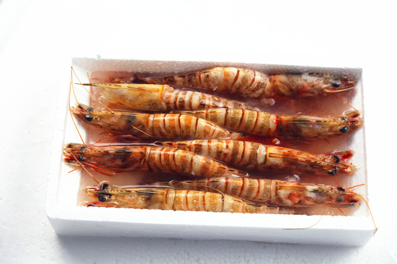 Sea Frozen Shrimp in Good Quality