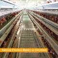 Projeto automático um gaiolas de camada tipo ovo de galinha