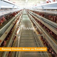Vente directe Farm Poultry Cage de poulet automatique