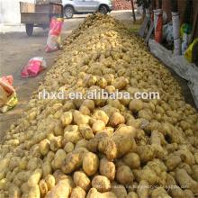 Patata de primavera china a buen precio