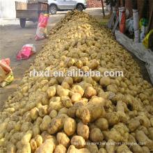 Chinese spring potato at good price