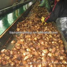 taro 2012 new crop seller