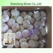 Supply Nature Fresh White Garlic