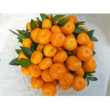Export New Crop gute Qualität China Mandarin Orange