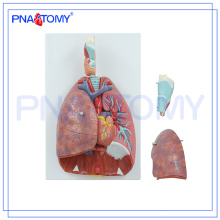 PNT-0430 Modèle de cavité nasale, orale, pharynx et larynx, modèle de système respiratoire humain