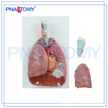 PNT-0430 Nasal,Oral,Pharynx and Larynx Cavity Model,Human Respiratory System Model