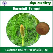 Extracto de cola de caballo 100% natural en polvo