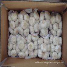 2016 ajo blanco puro fresco en el precio más bajo de China