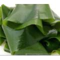 Algues séchées de Dalian à vendre