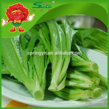 2015 Emballage de laitue frais Youmai chinois