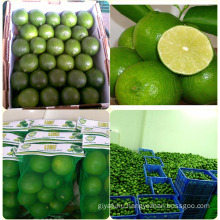 FRESH LIME SEEDLESS/ DRIED LIME SLICES