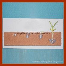 Desarrollo y Crecimiento Demostración Modelo de una semilla de frijol, estilo colgante