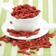Herbes chinoises Goji Berry
