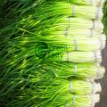 Hochwertiger IQF Frozen Garlic Sprout Cut