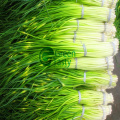 Corte de corte de alho congelado IQF de alta qualidade