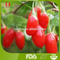 New Harvest Chinese high quality Chinese organic goji berries/wolfberries