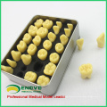 TOOTH01(12573) Quality Resin Human Tooth Anatomy Model with Alloy Box Portable Packaging