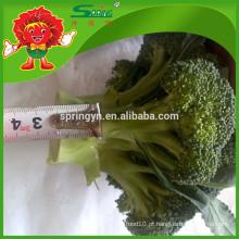 Alta qualidade IQF brócolis