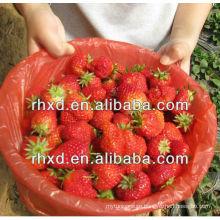 frozen strawberry whole/dice/slice