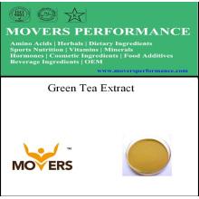 Extrait d'herbes organiques extrait de thé vert