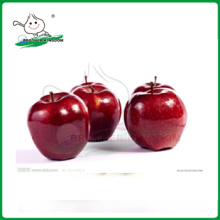 red delicious apple/huaniu apple/new high quality China fresh top red huaniu apples