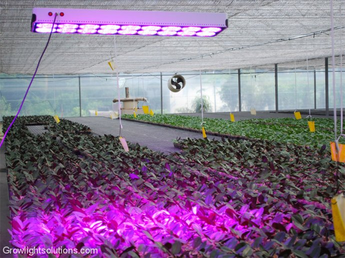 Luz LED 650mA Apollo18 LED Grow Light