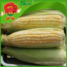 Prix par tonne fournisseur de maïs jaune congelé