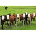 galvanized cattle panels fence panel / grassland fence