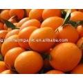 2012 fresh navel orange in carton