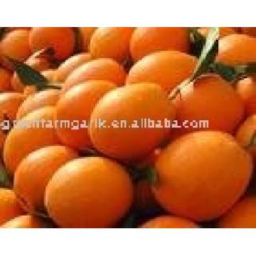 2012 naranja fresca del ombligo en cartón