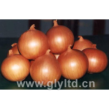 Good Quality Fresh Yellow Onion with Mesh Bag