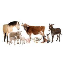 Increase The Animal Antibody L-Tryptophan