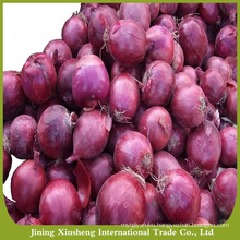 2016 new season red onion for export