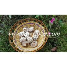 Corte de haste de alta qualidade desidratado grande flor branca cogumelo Shiitake