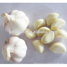 IQF Frozen Peeled Garlic Clove Jar Packing