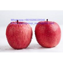 China Top Quality New Crop FUJI Apple Food Grade