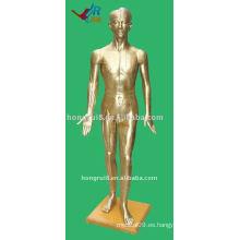 178cm Male Acupuncture Modelo del cuerpo humano, Maniquí de Acupuntura
