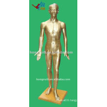 178cm Male Acupuncture Model of the human body,Acupuncture Manikin
