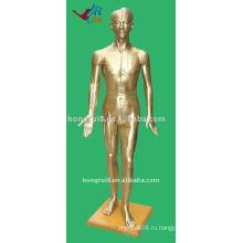178cm Мужской Акупунктура Модель человеческого тела, Иглоукалывание Манекен