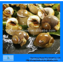 superior frozen better quality moon snail on sale