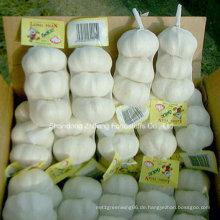 Top-Qualität chinesischen reinen weißen Knoblauch