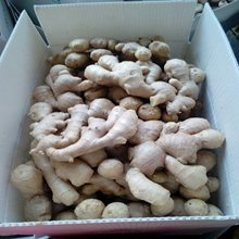 Air Dried Ginger to Russia Market