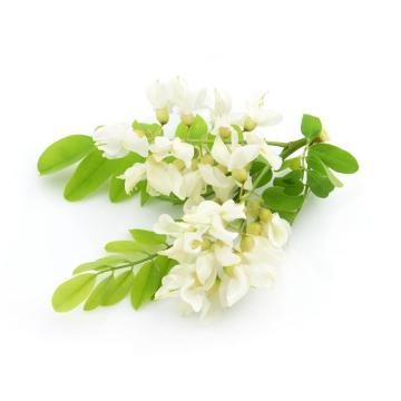 Natürlicher Pflanzenextrakt Sophora Japonica Extrakt