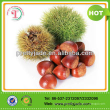2014 Good Chinese Fresh Chestnut
